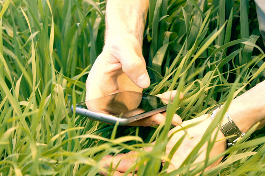 Spectral phenotyping of wheat plants using a smartphone. (Photo: Rethmeyer)