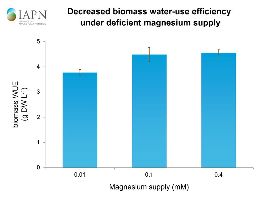Decreased biomass water-use efficiency under deficient magnesium supply