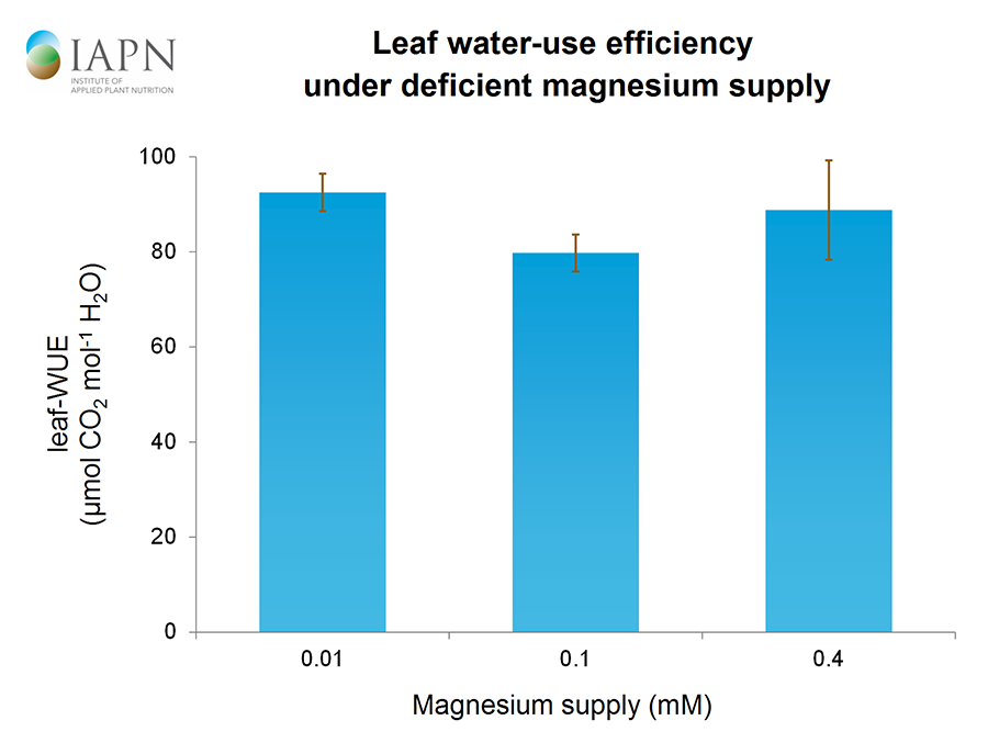 Leaf water-use efficiency under deficient magnesium supply