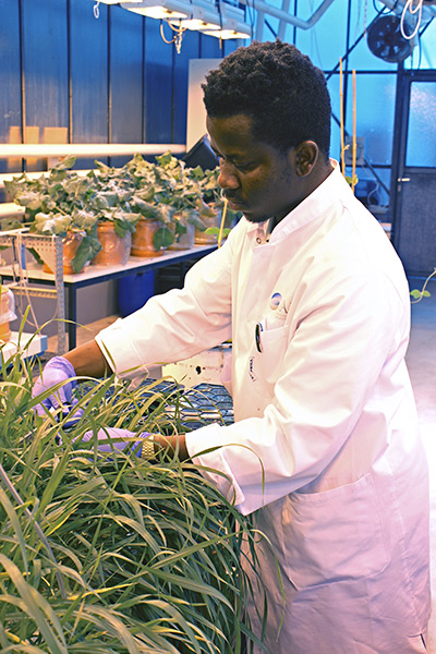 Master's student John Kumi conducting research on how modified supplies of magnesium and boron may influence aluminum toxicity in plants. (Photo: Tränkner)